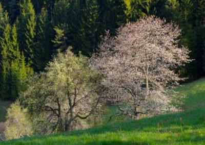 Jaro v Beskydech musíte vyzkoušet ;-)
